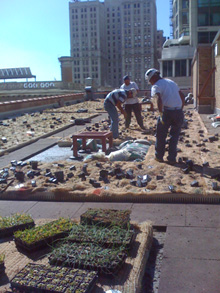 Sustainable Design Green Roof Install